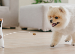 Furbo: You and your dog are going to love this