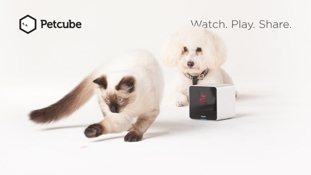Petcube Feature