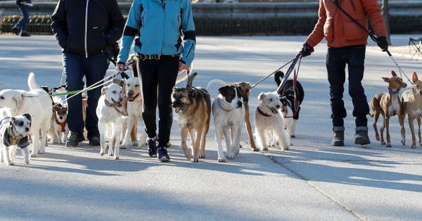 Startup Wag Labs' dog-walking app mistakenly exposed home addresses and lockbox codes