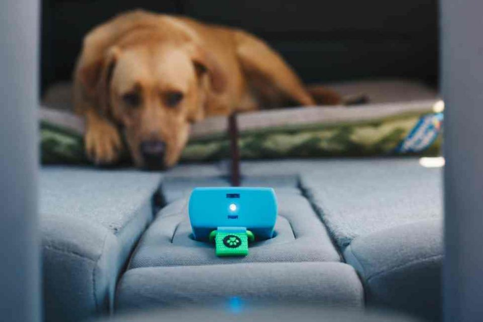 Too Hot for Toto? The PuppComm Monitor for Dogs Gives Owners Peace ...
