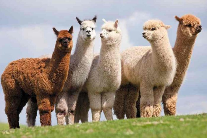 Fintech startup Alpaca unveils world's first commission free API stock broker for automated investing and trading;closed a $3 million Pre-Series A funding