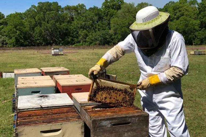 Florida startup Domestic Beekeepers is bringing 100 percent raw honey from the hives to your kitchen table