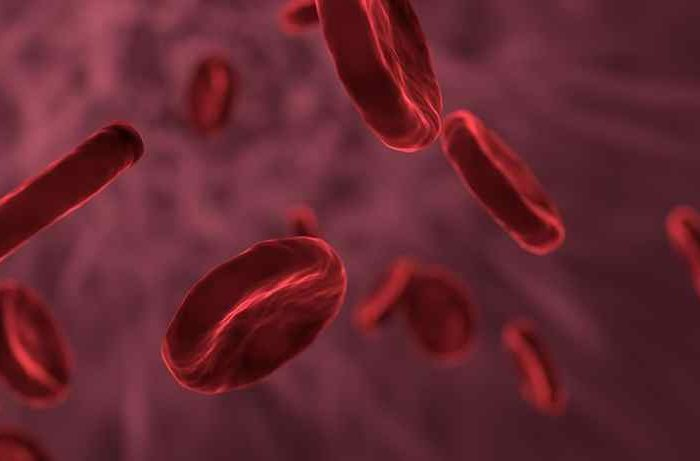 Veravas raises $4 million in seed funding to transform laboratory medicine