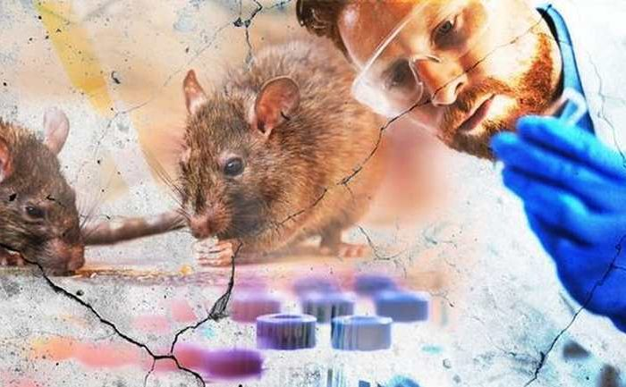 Is hantavirus the new coronavirus? A man in China dies from hantavirus, over 1,000 cases now reported