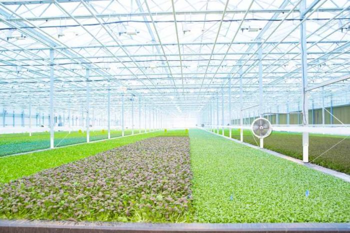 FoodTech startup BrightFarms lands $100 million Series E funding to expand high-tech indoor farming across America