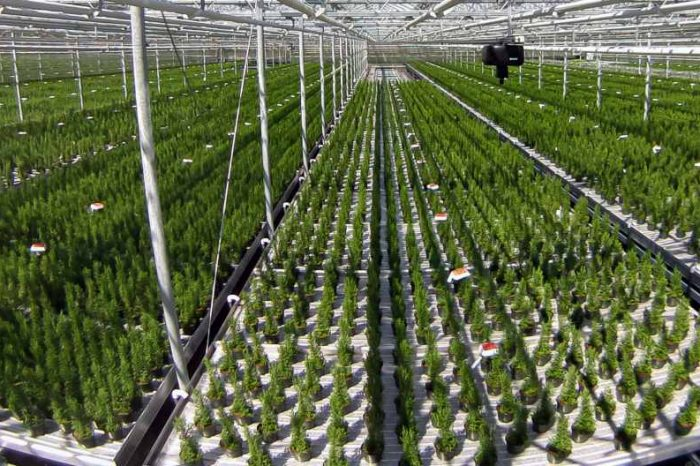 Agritech startupiUNU raises $7M in Series A funding to transform the way indoor growers do business