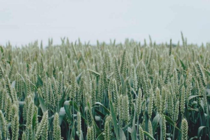 London-based geospatial intelligence startup PlanetWatchers raises$3.5M to provide Analytics as a Service (AaaS) to the crop insurance industry