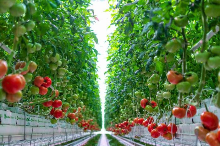 Farms of the Future: How AppHarvest's indoor farm uses AI to produce 30 times more food per acre than traditional farms; also uses 90% less water
