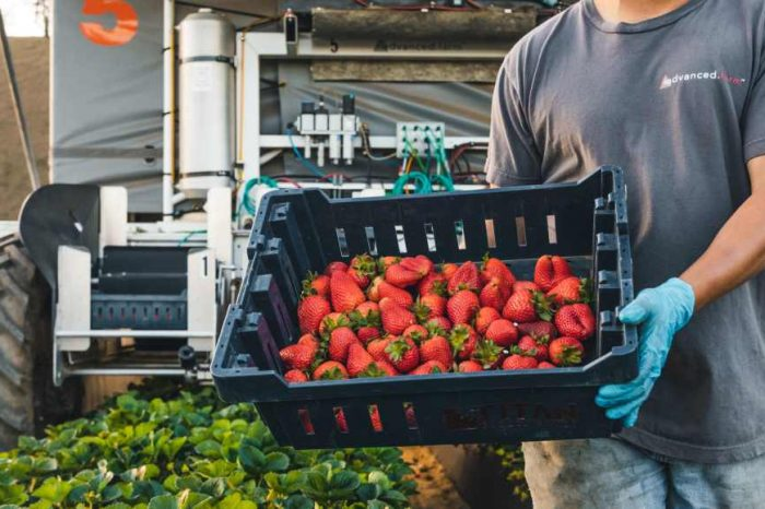 AgricTech startup Advanced Farm becomes the world's first company to bring robotically picked strawberries to grocery stores; bags$25M in funding